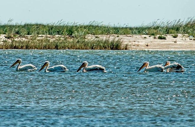 Завораживающий мир острова Бирючий через объектив фотографа (ФОТО)