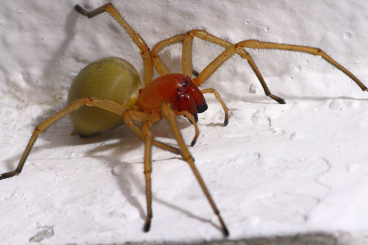 форма картинки желтого паука сака жаропрочный материал